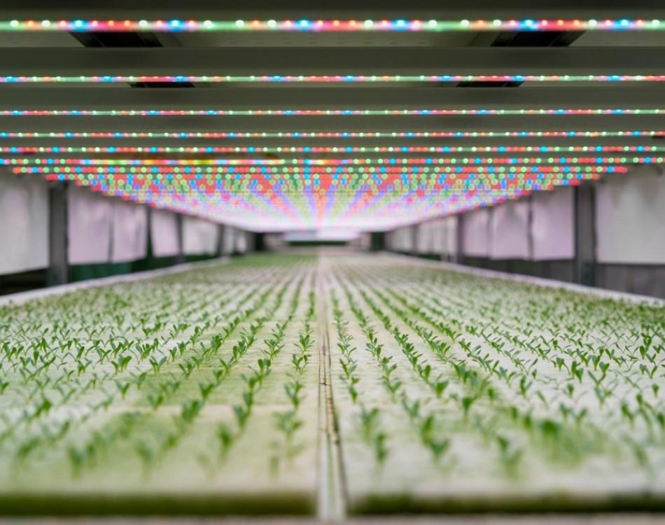 Következő generációs termesztés: Ez a légkondicionált